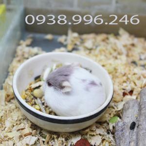Hamster Bò sữa tím