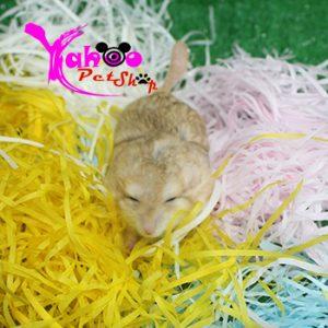 Giấy sợi màu lót chuồng hamster