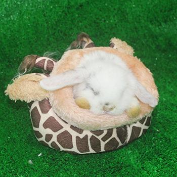 nhà ngủ hình trâu cho thỏ bọ