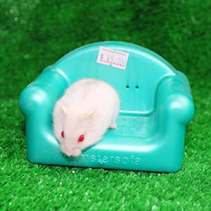 Ghế salon hamster