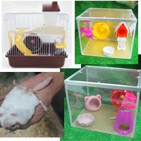 Nuôi hamster chọn lồng nhựa sắt hay mika hay kính