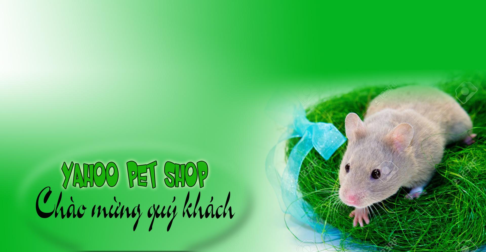shop hamster gia re hcm