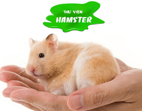 thu vien hamster-EDIT
