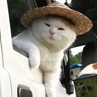 nón cho mèo