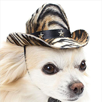 nón cao bồi cho chó