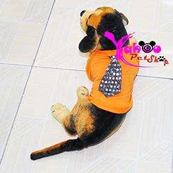 Áo cà vạt cho chó mèo