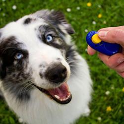 clicker huấn luyện chó