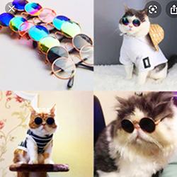 Mắt kính thầy bói cho chó mèo