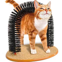 Gãi ngứa lông cho mèo