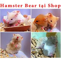 hamster bear