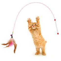 Cần câu mèo tay cầm ngắn